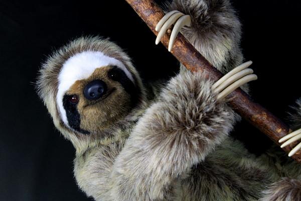 sloth2166.jpg